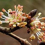 Szilfa-A felelősség virága