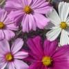 Virágterápia -Éden virágeszencia